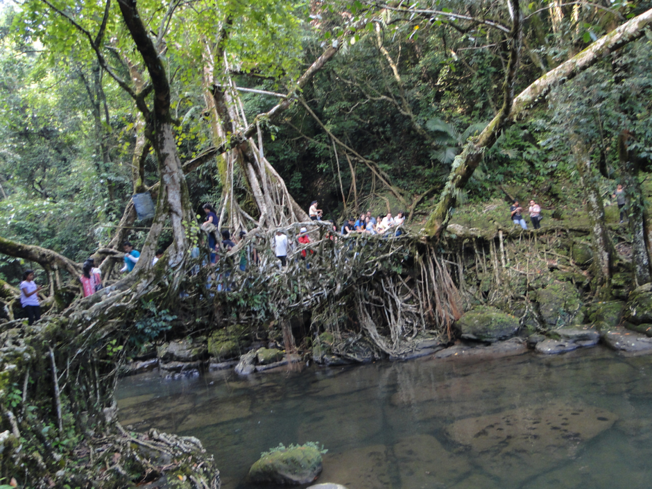 Living-Root-Bridge-Meghalaya