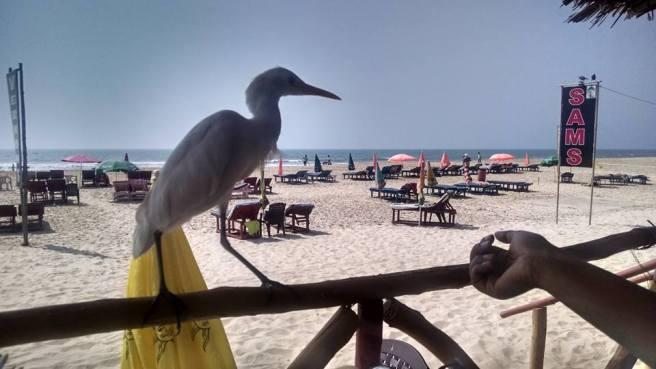 Mobor Beach South Goa