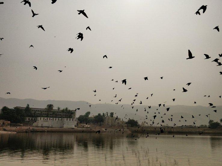 Pushkar poetry